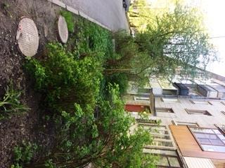 Продажа квартир: 2-комнатная квартира, Санкт-Петербург, Петергоф, Озерковая ул., 45, фото 1