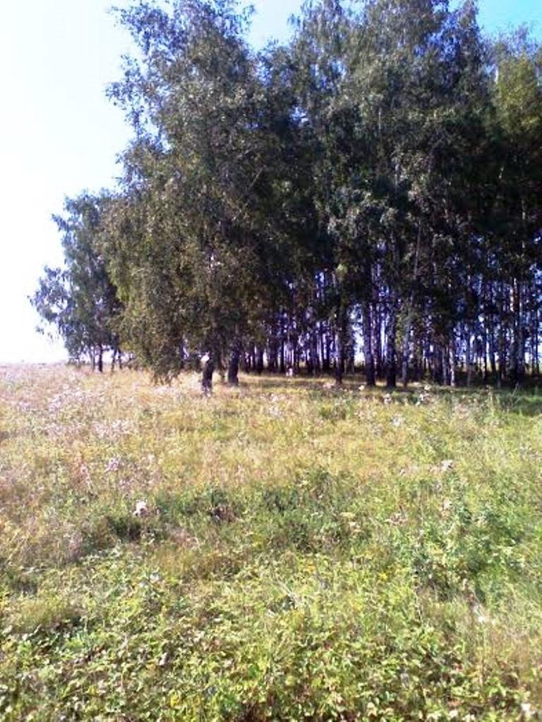 Продажа земельного участка Пензенская область, Лунинский р-н, с. Александрия, фото 1
